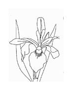 Fiore da colorare 191