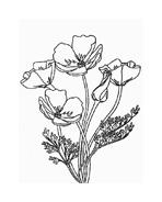 Fiore da colorare 194