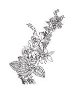 Fiore da colorare 195