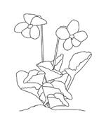 Fiore da colorare 208