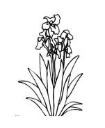 Fiore da colorare 210
