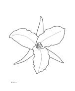 Fiore da colorare 212