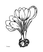 Fiore da colorare 214