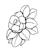 Fiore da colorare 229