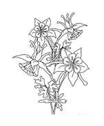 Fiore da colorare 232