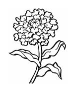 Fiore da colorare 238
