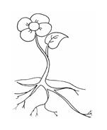 Fiore da colorare 245