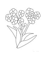 Fiore da colorare 249
