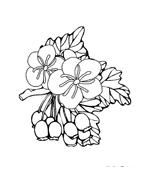 Fiore da colorare 251