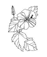 Fiore da colorare 252