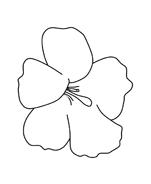 Fiore da colorare 253