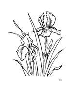 Fiore da colorare 254