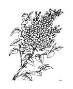Fiore da colorare 255