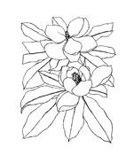 Fiore da colorare 256