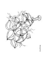 Fiore da colorare 258
