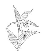 Fiore da colorare 259