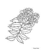 Fiore da colorare 260