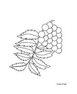 Fiore da colorare 261