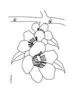 Fiore da colorare 262