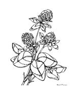 Fiore da colorare 265