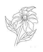 Fiore da colorare 270