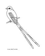 Uccello da colorare 151