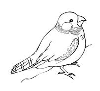 Uccello da colorare 152