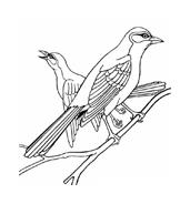 Uccello da colorare 154