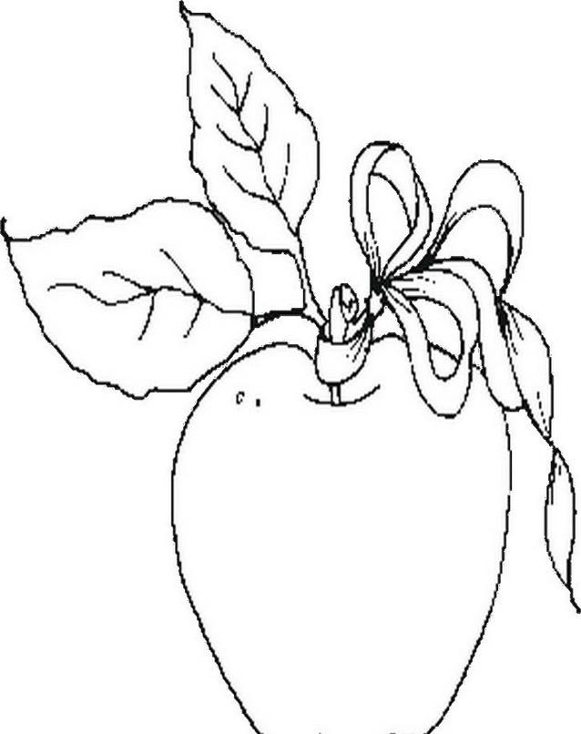 Frutto invernale da colorare 7
