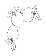 Frutto invernale da colorare 10
