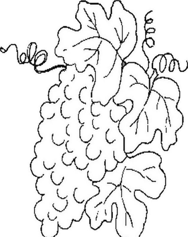 Frutto invernale da colorare 19