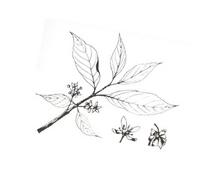 Arbusto da colorare 23