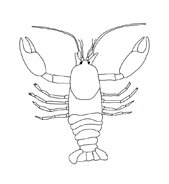 Crostaceo da colorare 22