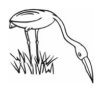Uccello da colorare 155