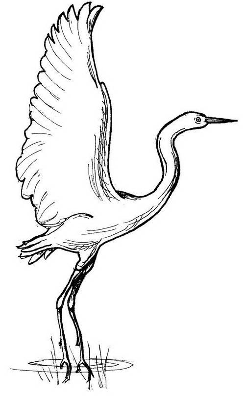 Uccello da colorare 156