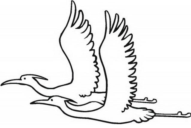 Uccello da colorare 157