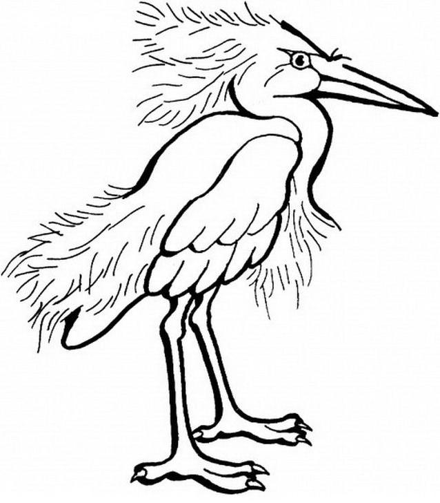 Uccello da colorare 158