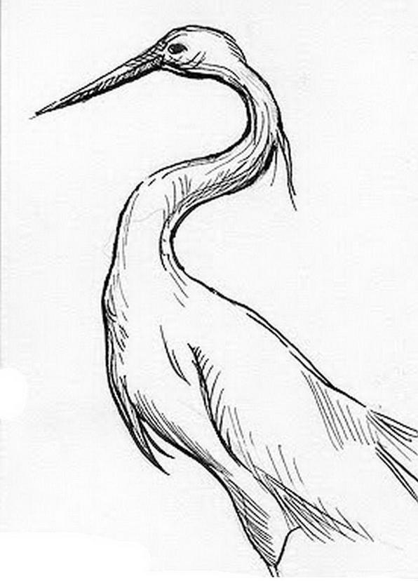 Uccello da colorare 159