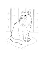 Gatti da colorare 22