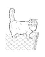 Gatti da colorare 23