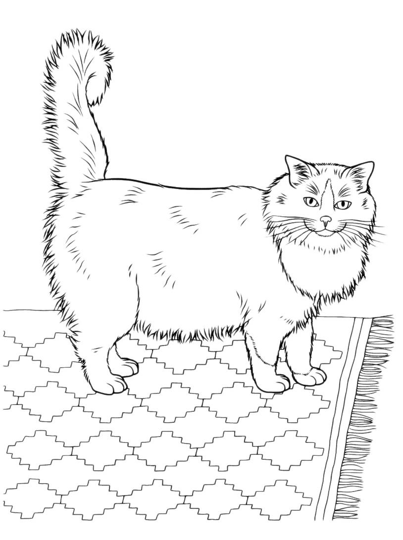 Gatto da colorare 22