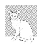 Gatti da colorare 25