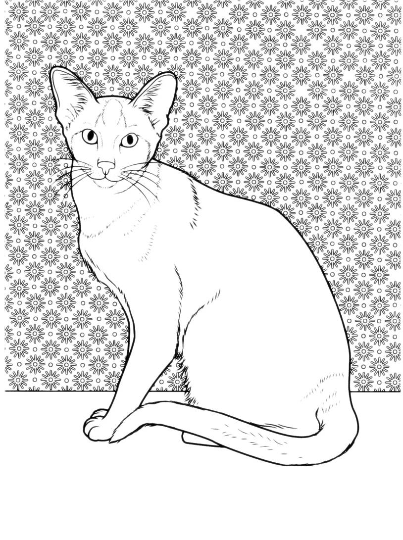 Gatto da colorare 24