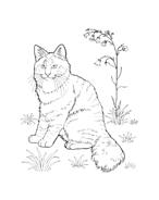 Gatti da colorare 26