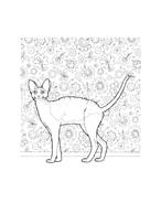 Gatti da colorare 30