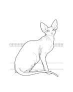 Gatti da colorare 33
