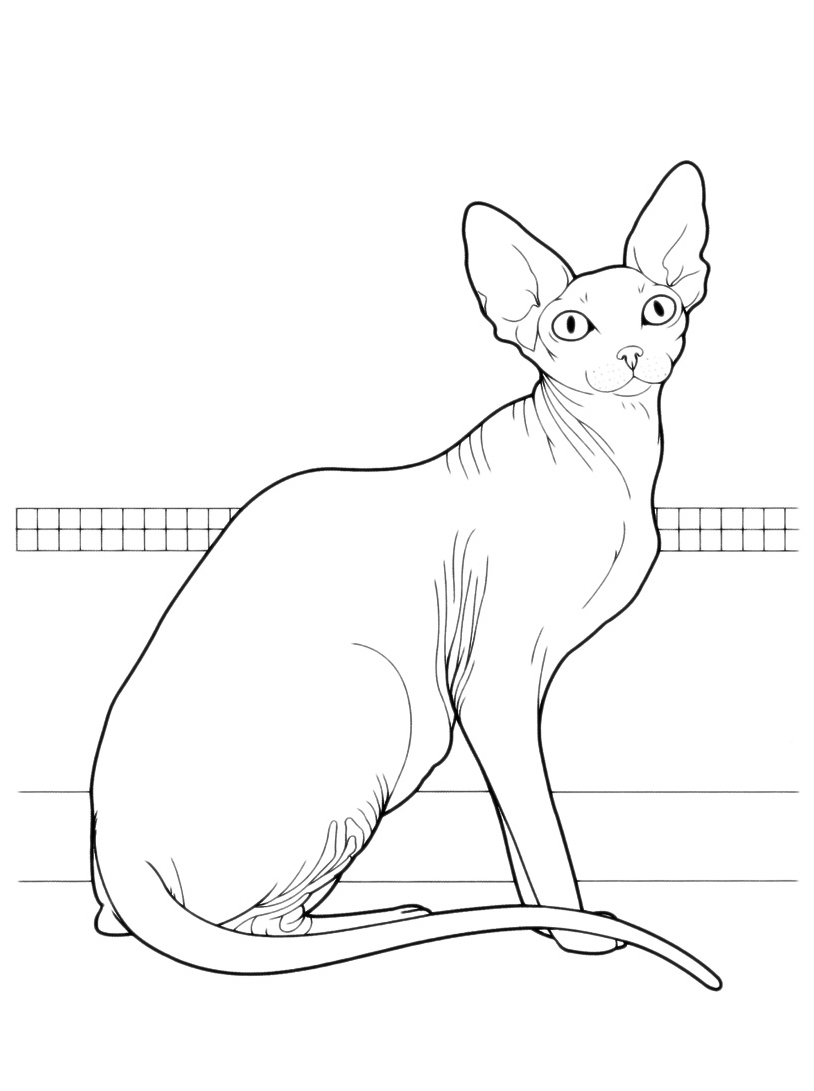 Gatto da colorare 32