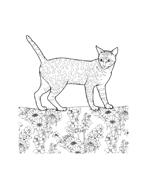 Gatti da colorare 34