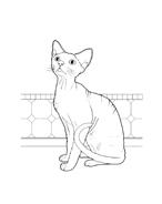 Gatti da colorare 36