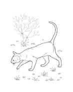 Gatti da colorare 37